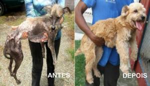 Cães-resgatados-Antes-e-Depois-1