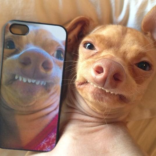 cachorro self