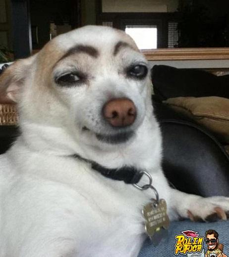 As-imagens-mais-engracadas-de-animais-em-2012-8