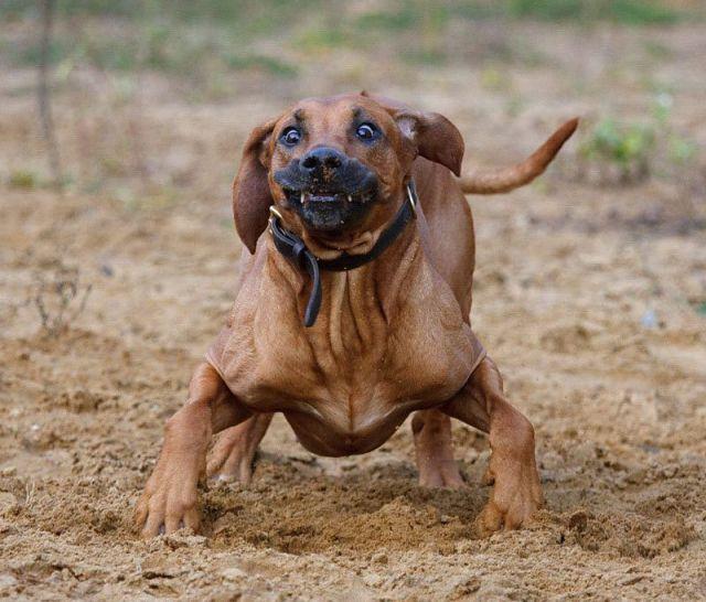 fotos-engraçadas-animais-imagens-067