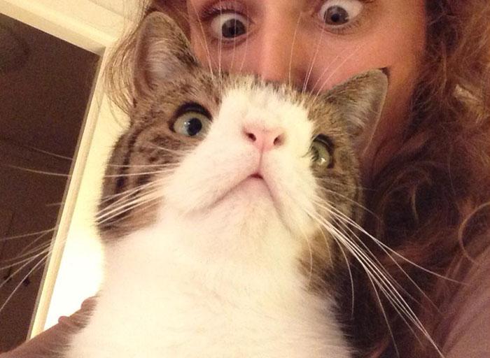 gato-fofo-sem-osso-nasal-monty-7