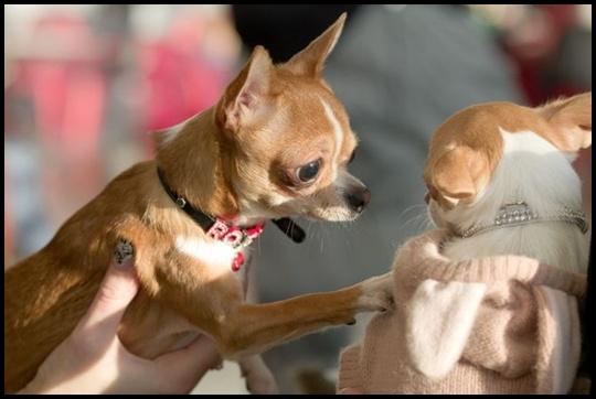 imagens+loucas+e+engraçada+com+animais+LOL+001BlogdeImagens.com-