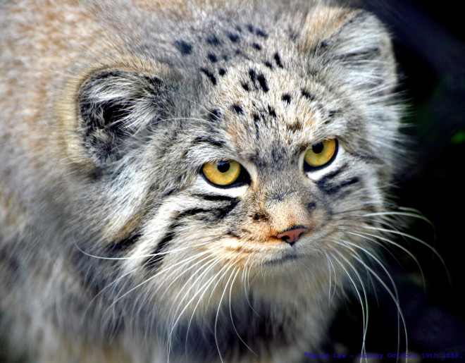 Grumpy_Kitty...-660x515