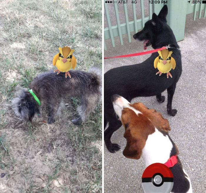 Pokemon-Cachorro_ADCT-7