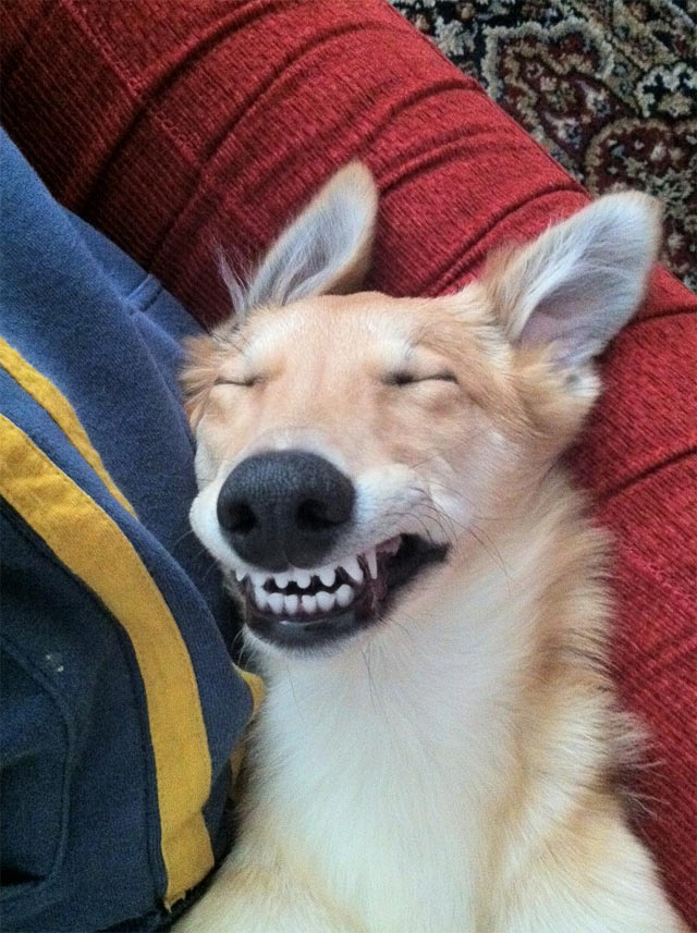 cachorro-sorrindo (2)