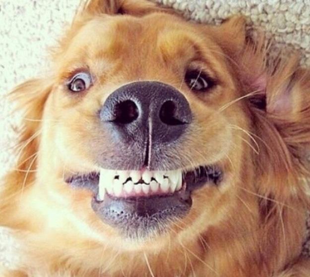 cachorro-sorrindo-desconfiado