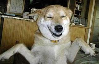 cachorro_sorrindo6