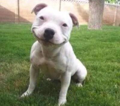 cachorro_sorrindo_1