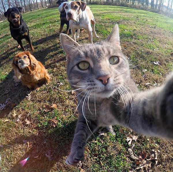 gato-selfie-2