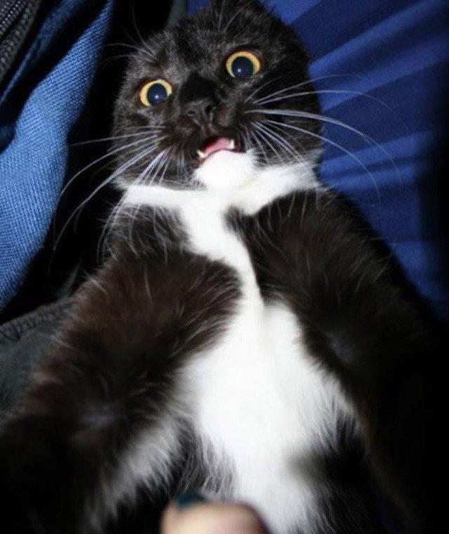 gatos-selfies-9