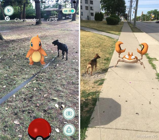 pokemon-go-dog-walking-animal-shelter-muncie-9