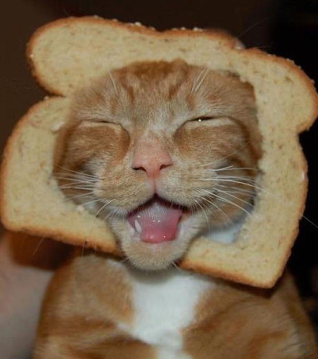 um-gato-hilario_3750_w620
