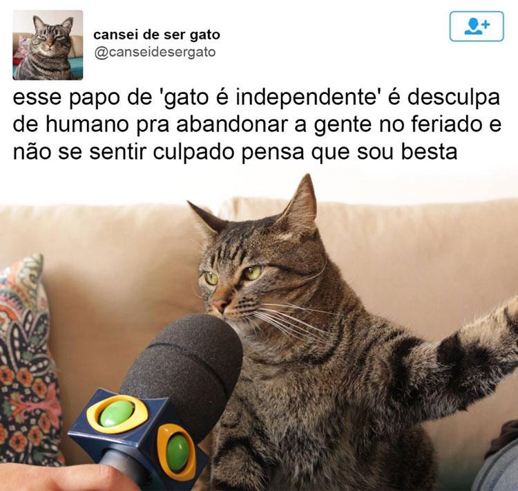 gatinho-entrevistado-abandonado