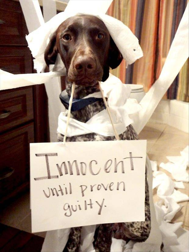 funny-dog-shaming-pictures