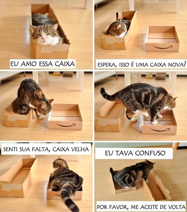 logica-dos-gatos-013